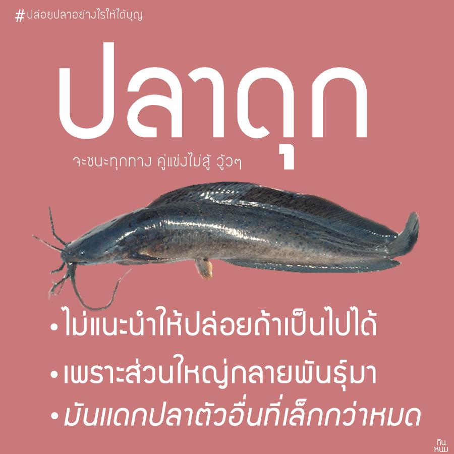 ปล่อยปลาดุก ลงแหล่งน้ำธรรมชาติไม่ดี