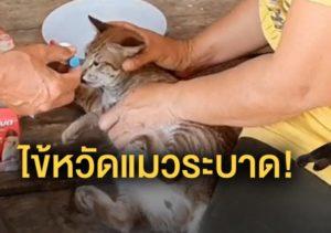 คนรักแมวต้องระวัง!! ไข้หวัดแมว กำลังระบาดหนักในช่วงนี้