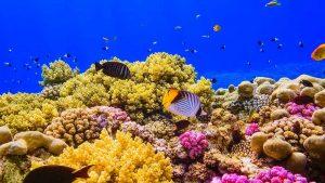 ภาวะโลกร้อน ทำร้าย ปะการังในทะเลแดง ไม่ได้