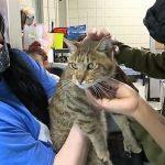 Clouded Jack แมวบ้าน ที่คล้ายแมวป่า ทำเอาโรงเรียนในรัฐ Pennsylvania วุ่นวาย